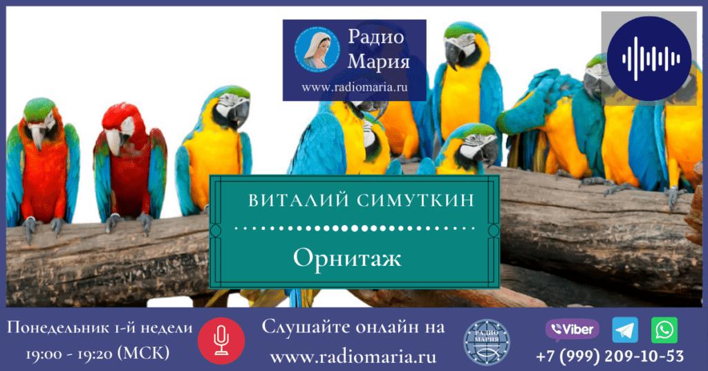 "Виталий Симуткин ""Орнитаж"""