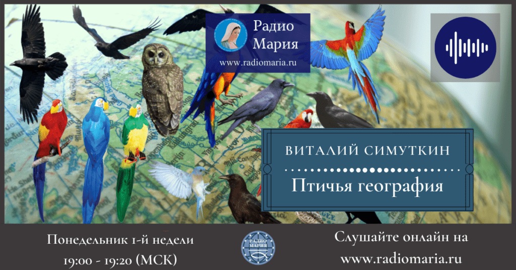 """Виталий Симуткин """"Птичья география"""""""